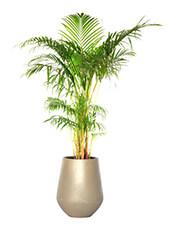 <span>Batel Palm </span>